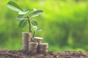 Money-Plant-small
